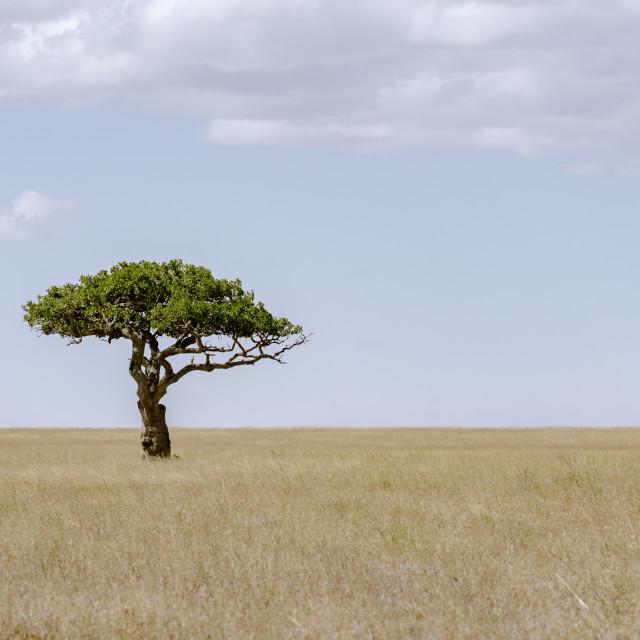 """""""Serengeti Landscape"""" stock image"""