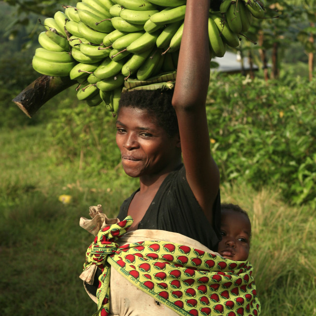 """African woman with baby on her back and green bananas on her head in..."" stock image"
