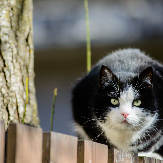 """Serious black cat sitting on fence in garden."" stock image"