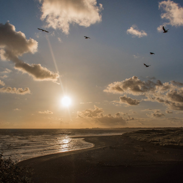 """""""Gulls flying out to meet the tide."""" stock image"""