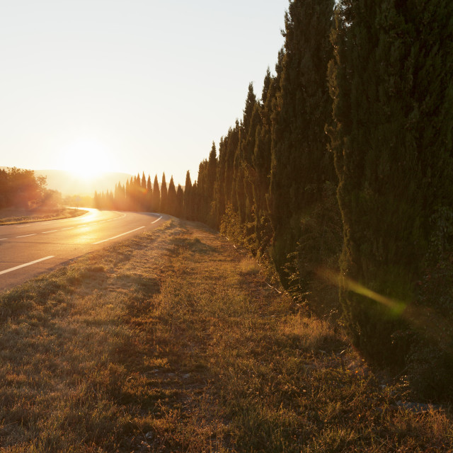 """""""Alley of cypresses along a road at sunset, Gordes, Provence,..."""" stock image"""