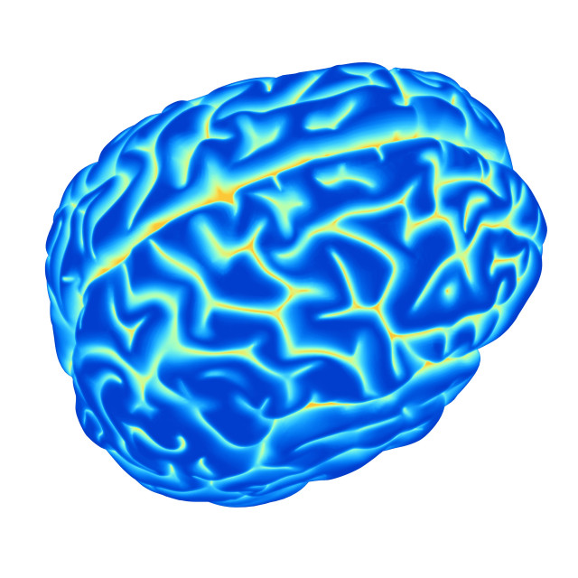 """Human brain, computer artwork"" stock image"