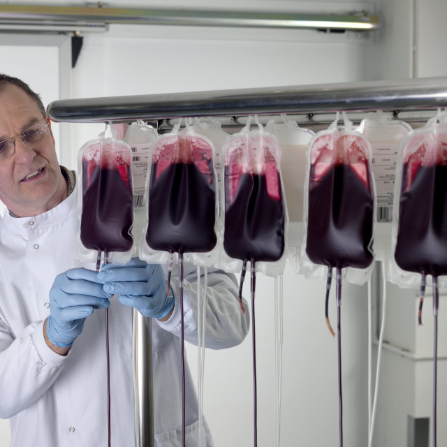 """""""Donor blood processing"""" stock image"""