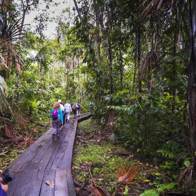 """Walking in the Amazon Rainforest at Sacha Lodge, Coca, Ecuador, South America"" stock image"