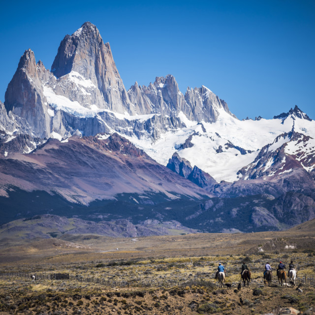 """""""Gauchos riding horses and herding sheep with Mount Fitz Roy behind, El..."""" stock image"""
