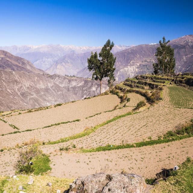 """Colca Canyon pre Inca terraces and farmland at Cabanaconde, Peru"" stock image"