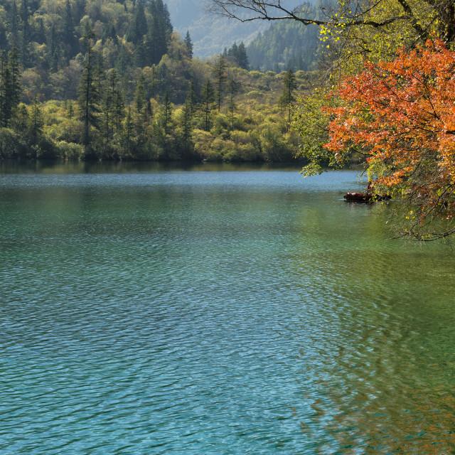"""Panda Lake, Jiuzhaigou National Park, Sichuan Province, China, Unesco World..."" stock image"