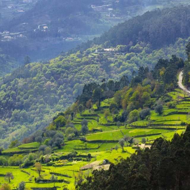 """""""Terraced fields, Peneda Geres National Park, the only national park in..."""" stock image"""