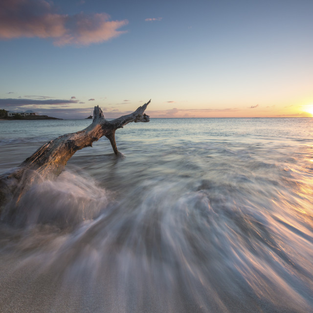 """""""Waves on a tree trunk on the beach framed by the Caribbean sunset, Hawksbill..."""" stock image"""