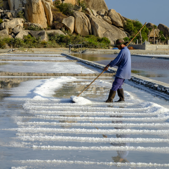 """Harvesting salt in the salt pans, Phan Rang, Ninh Thuan province, Vietnam,..."" stock image"