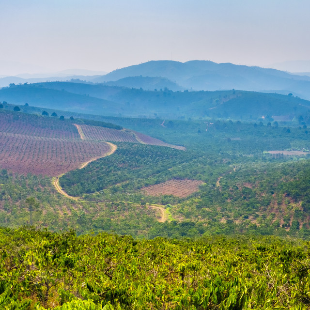 """Rolling hills and coffee plantations in Central Highlands, Vietnam"" stock image"