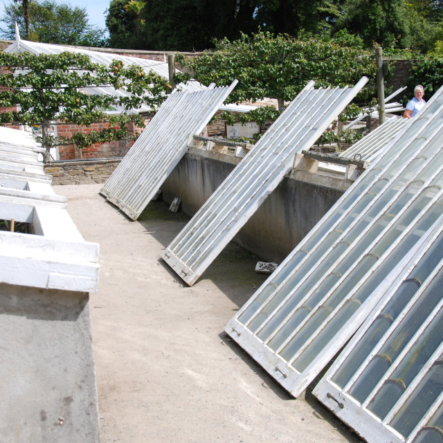 """""""Coldframes in Heligan"""" stock image"""