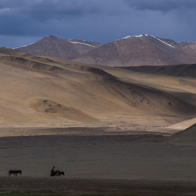 """""""A nomad near Tso Moriri in the remote region of Ladakh in north India"""" stock image"""