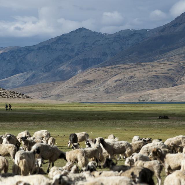 """Nomads near Tso Moriri in the remote region of Ladakh in north India"" stock image"