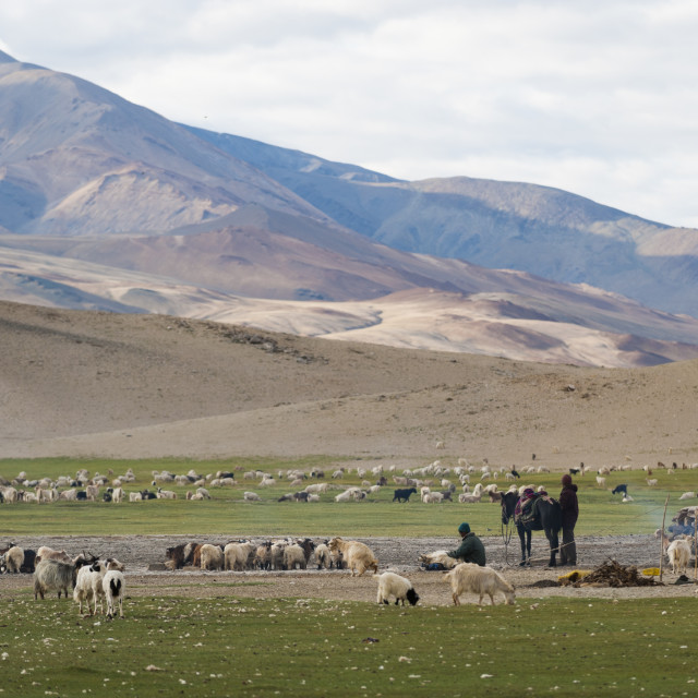 """""""Nomads living in a tented camp near Tso Moriri in Ladakh, North India, India,..."""" stock image"""