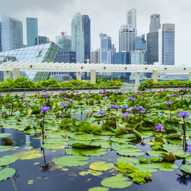 """Water lily garden by the ArtScience Museum with city skyline beyond, Marina..."" stock image"