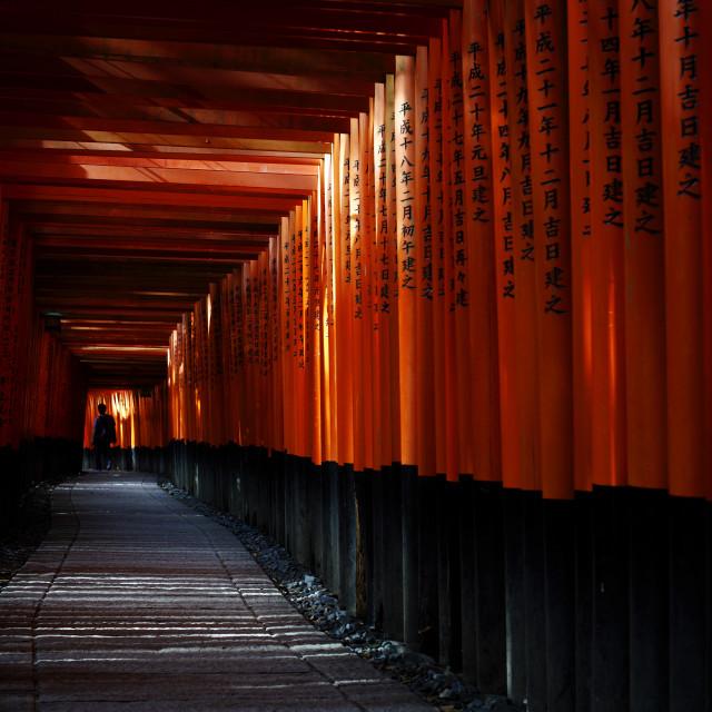 """Torii tunnel, Fushimi-inari shrine"" stock image"