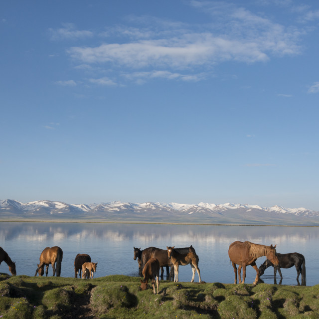 """Lake Song-Köl. Kyrgyzstan. Central asia."" stock image"