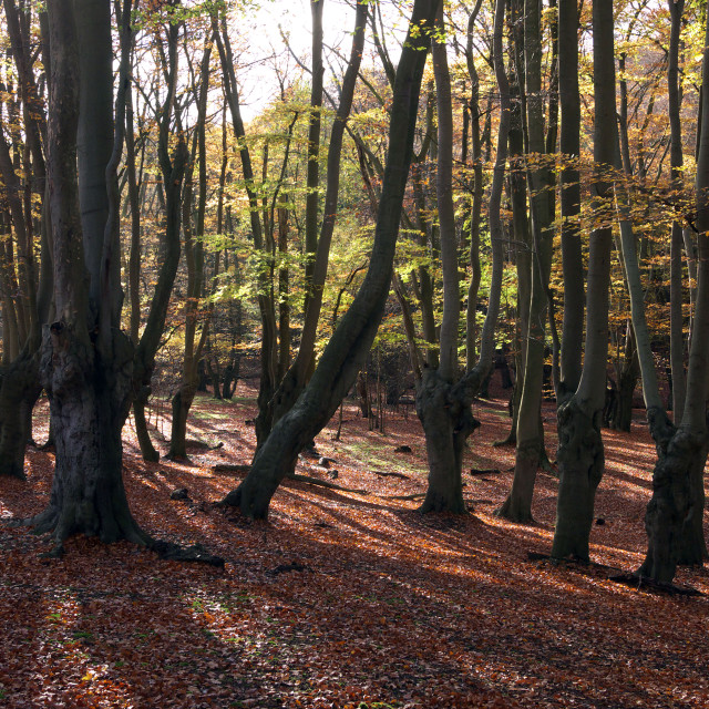"""""""Epping forest, Epping, Essex, UK"""" stock image"""