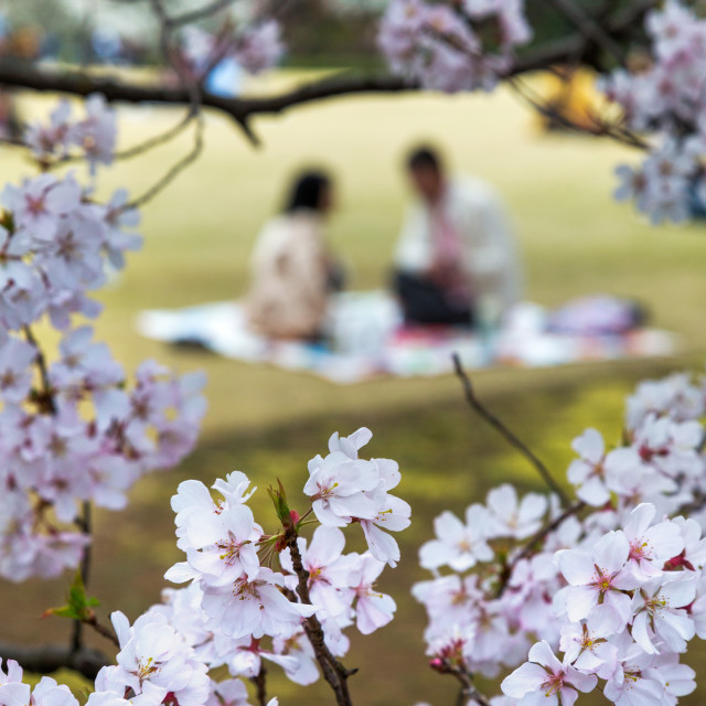 """People relaxing and picnicking amongst the beautiful cherry blossom in Tokyo..."" stock image"