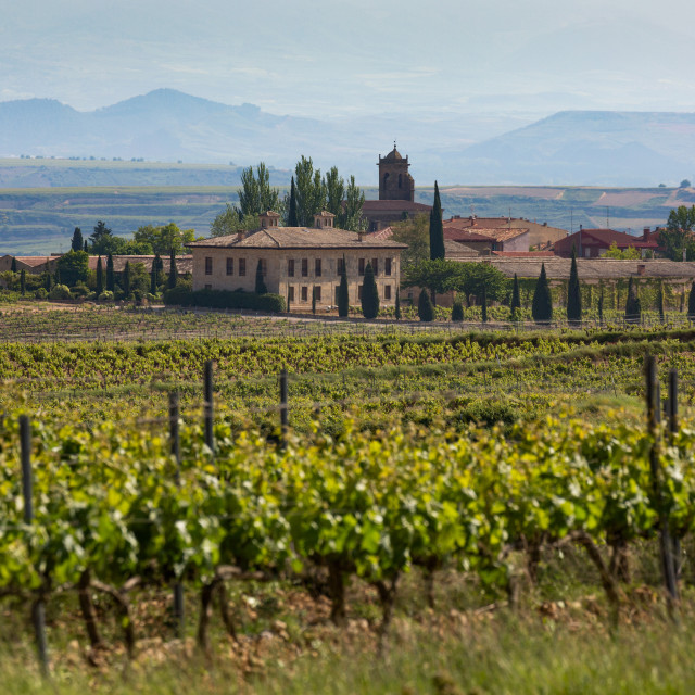 """Idyllic vineyard in La Rioja, Spain, Europe"" stock image"