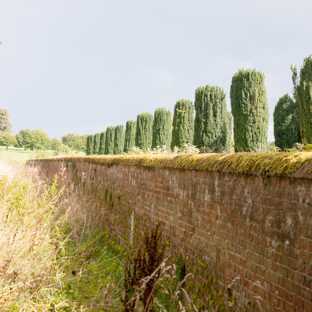 """""""interesting view of row of trees above wall in sunlight summer"""" stock image"""