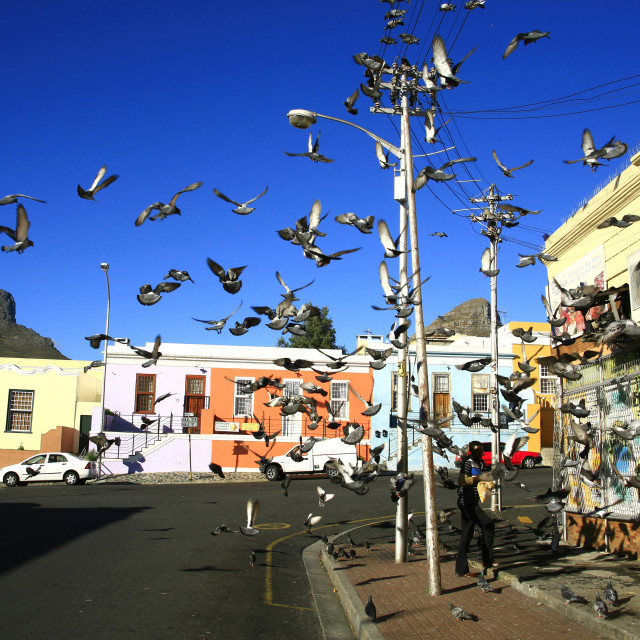 """pigeons fly into the air at BoKaap area, a historic Muslim area with..."" stock image"