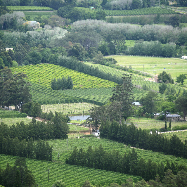 """""""vineyards near Franschhoek, the Wine Route, Western Cape, South Africa,..."""" stock image"""