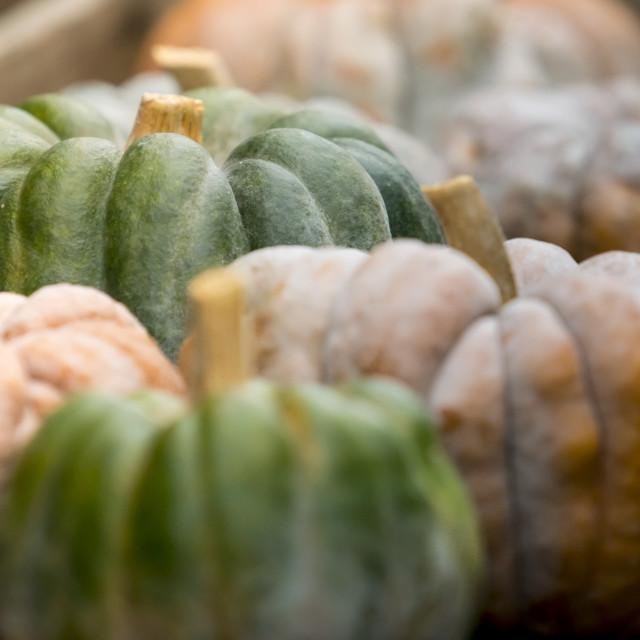 """Pumpkin on display 2"" stock image"