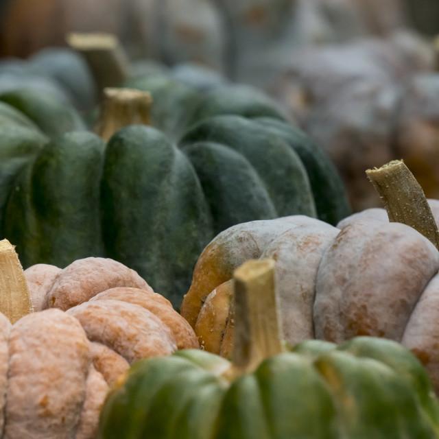 """Pumpkin on display 3"" stock image"