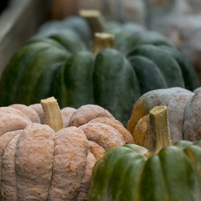 """Pumpkin on display 4"" stock image"
