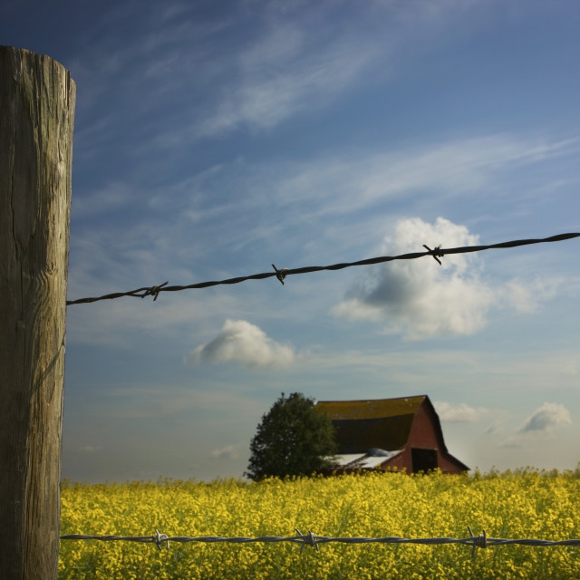 """""""Alberta, Canada; View Of An Old Barn Through A Barbed Wire Fence"""" stock image"""