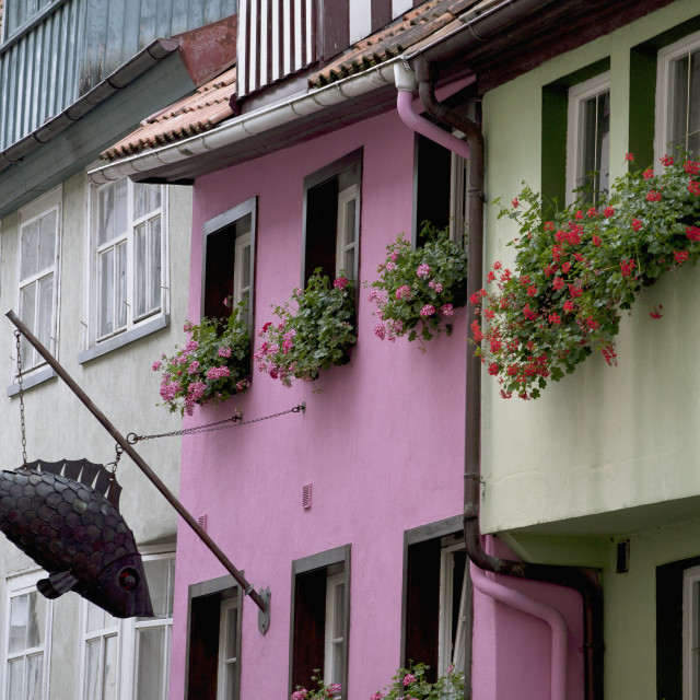 """""""Colourful Building Fronts With Metal Fish Sculptures And Flower Boxes On The..."""" stock image"""