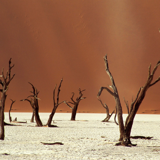 """The desolation of Deadvlei, near Sossusvlei, with dead camelthorn trees..."" stock image"