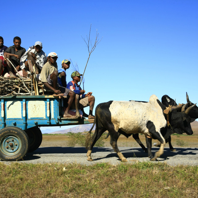 """local transport, ox drawn cart, Madagascar. 07-22-2007"" stock image"