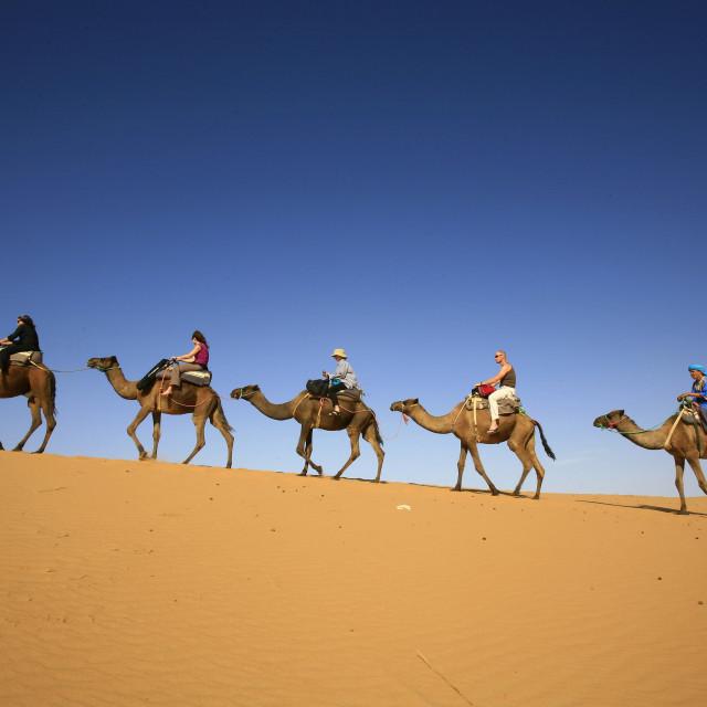 """""""camel safari near Erg Chebbi, Merzouga, Sahara Desert, Morocco. 10-07-2006"""" stock image"""