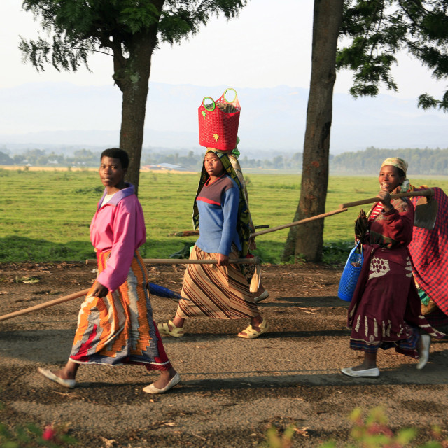 """Rwandan women going to work, near Parc des Volcans, near the town of Musanze,..."" stock image"