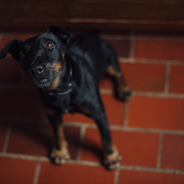 """Terrier"" stock image"