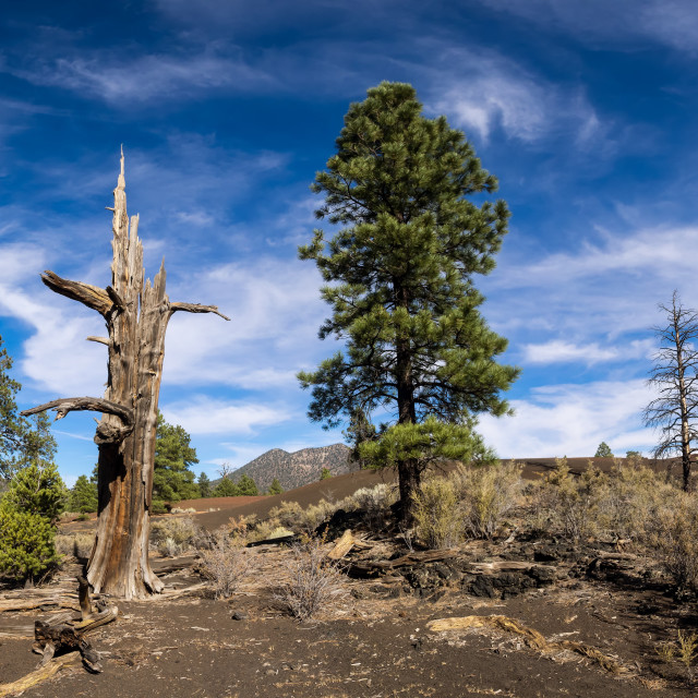 """""""Sunset Crater Volcano National Monument lava flow"""" stock image"""