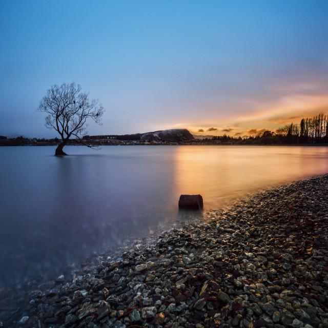 """The Tree of Lake Wanaka, South Island, New Zealand"" stock image"