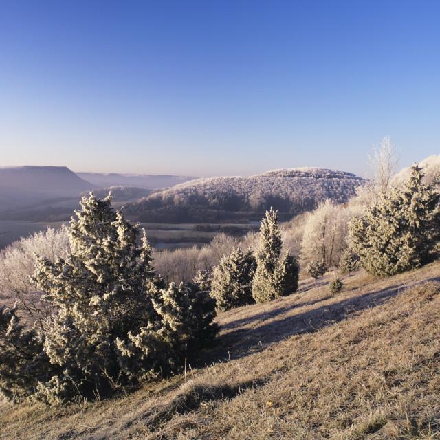 """""""Juniper, winter morning, Kaltes Feld, Wissgoldingen, Swabian Alb, Baden..."""" stock image"""