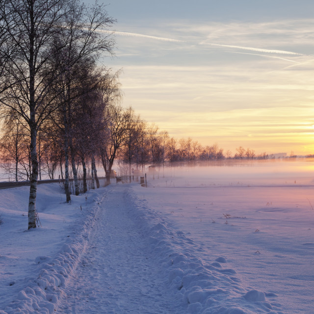 """Federsee Nature Reserve, winter, sunset, Bad Buchau, Upper Swabia, Baden..."" stock image"