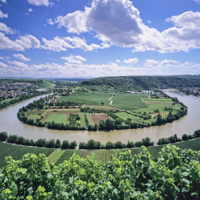 """Bight of Neckar River, Mundelsheim, Baden Wurttemberg, Germany, Europe"" stock image"