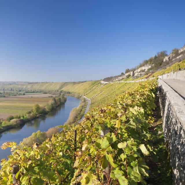 """Vineyards in autumn, Mundelsheim, Neckartal Valley, Neckar River, Baden..."" stock image"