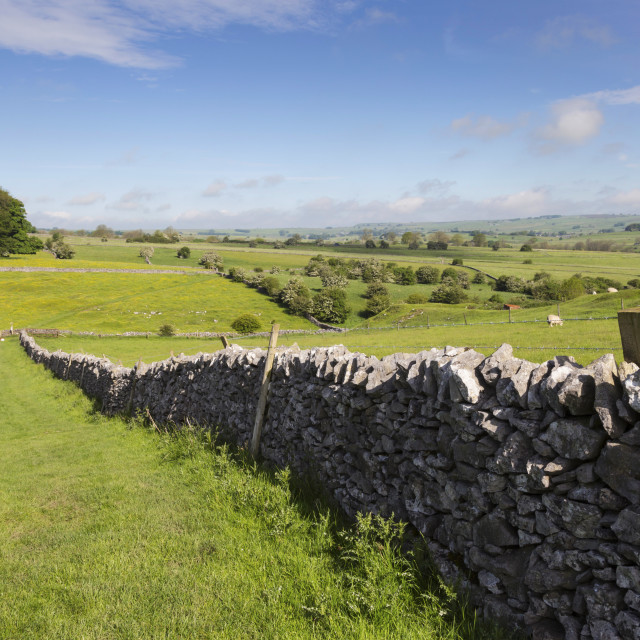 """Dry stone wall, farmers' fields and a copse of trees, Limestone Way, Monyash,..."" stock image"