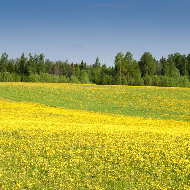 """""""Fields at Varska, Estonia, Baltic States, Europe"""" stock image"""