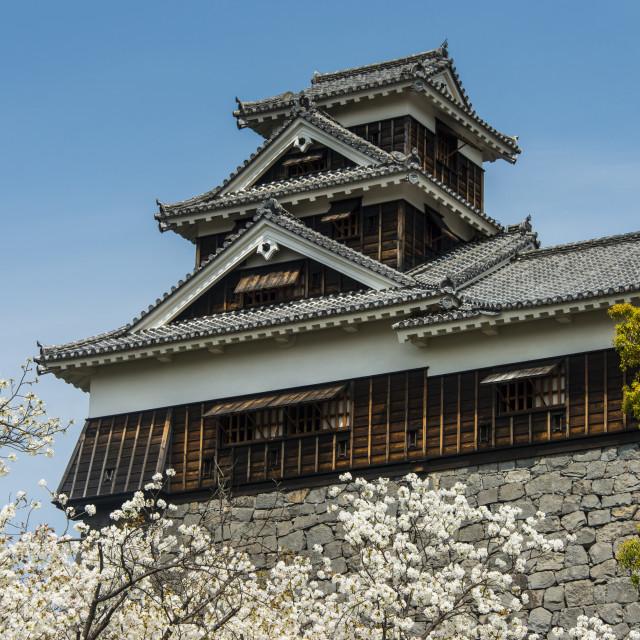 """Cherry blossom and Kumamoto Japanese Castle, Kumamoto, Kyushu, Japan, Asia"" stock image"