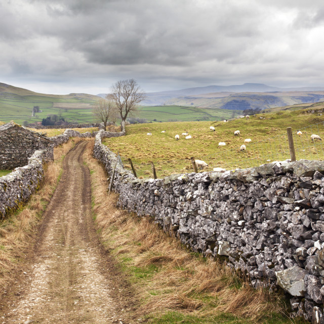 """""""The Pennine Bridle Way near Stainforth in Ribblesdale, Yorkshire Dales,..."""" stock image"""