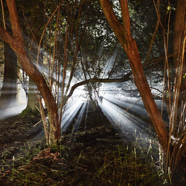 """Eerie woods and the English countryside at night, light streaming through..."" stock image"