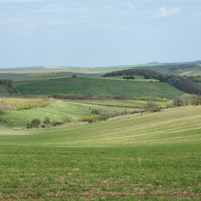 """View over rolling Marlborough Downs farmland from the Ridgeway, Marlborough..."" stock image"